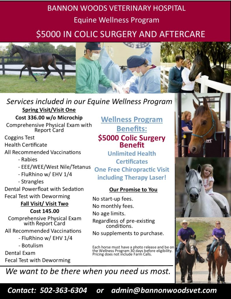 $5000 in Colic Surgery and Aftercare | Best Animal Hospital | Bannon Woods Veterinary Hospital | Louiseville KY